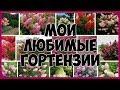 Мои ЛЮБИМЫЕ ГОРТЕНЗИИ mp3