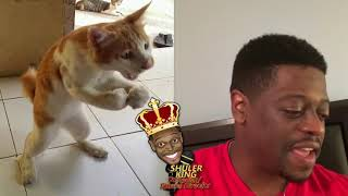 Shuler King - Who Did Something To This Cat?