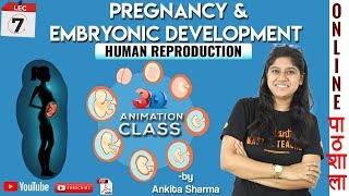 Pregnancy and Embryonic Development 3d Animation | Human Reproduction | Chapter 3 Biology Class 12