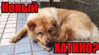 Собака, которая целыми днями ждёт хозяина на станции | Новый Хатико | Преданная собака ждет