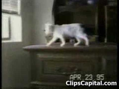 Stupid and funny cats video compiltion