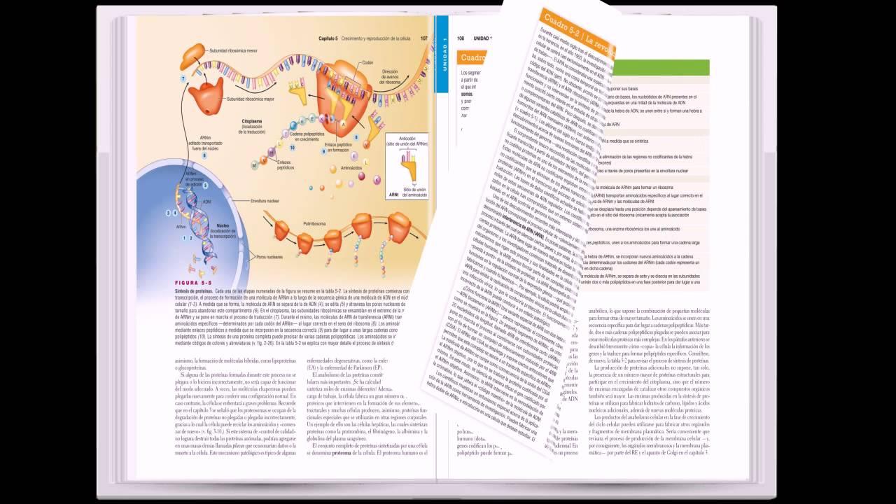 Patton. Anatomía y fisiología - YouTube