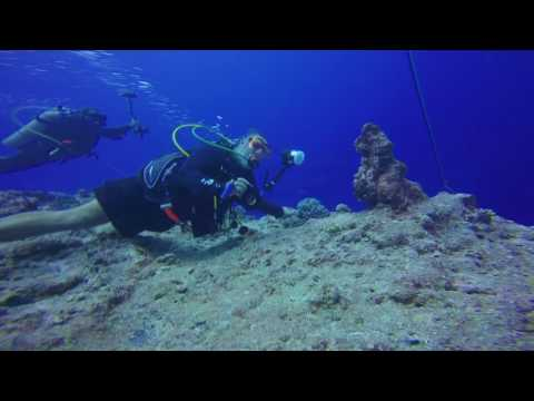 Rock Island Aggressor - Palau