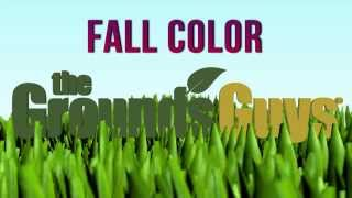 Fall Color: What to Plant Now | Tips from The Grounds Guys®