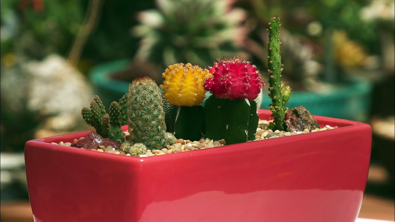 Pretty Cactus Container Garden June 2018