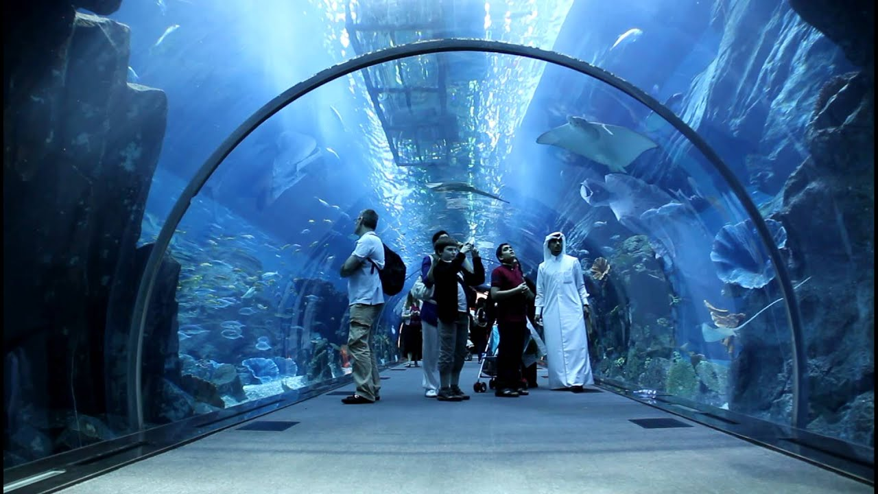 Dubai Mall Aquarium 22 Feb 2011 part 11  u062d u0648 u0636  u0627 u0644 u0633 u0645 u0643  u0645 u0648 u0644  u062f u0628 u064a   YouTube