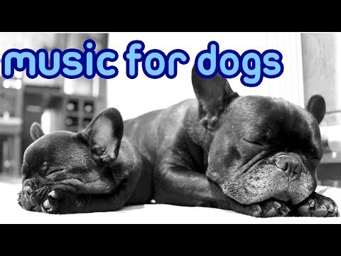 The Best Dog Music of 2018! Music to Relax Your Dog Quickly!