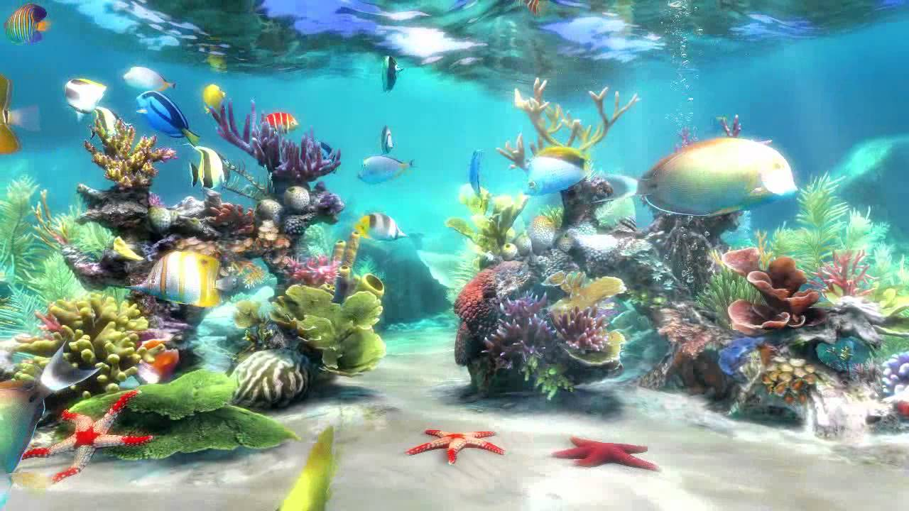 Hd Fish Live Wallpaper For Pc Simaquarium 3 Www Simaquarium Com Youtube