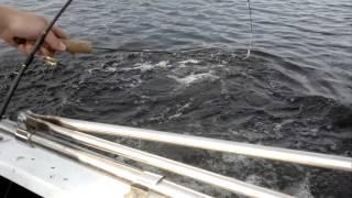 Щука на дорожку рыбалка на оз. вуокса