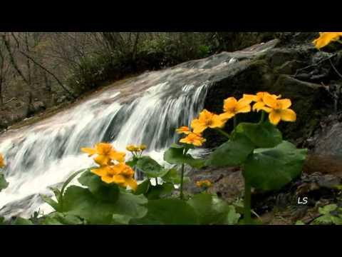 Фотографии цветов подснежников, первые цветы подснежники