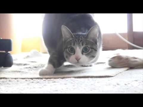 1 HOUR of Shaq vs The Cat - Wiggle [720 HD High Quality]
