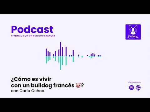 Especial: ¿Cómo es vivir con un bulldog francés 🐷? con Carla Ochoa