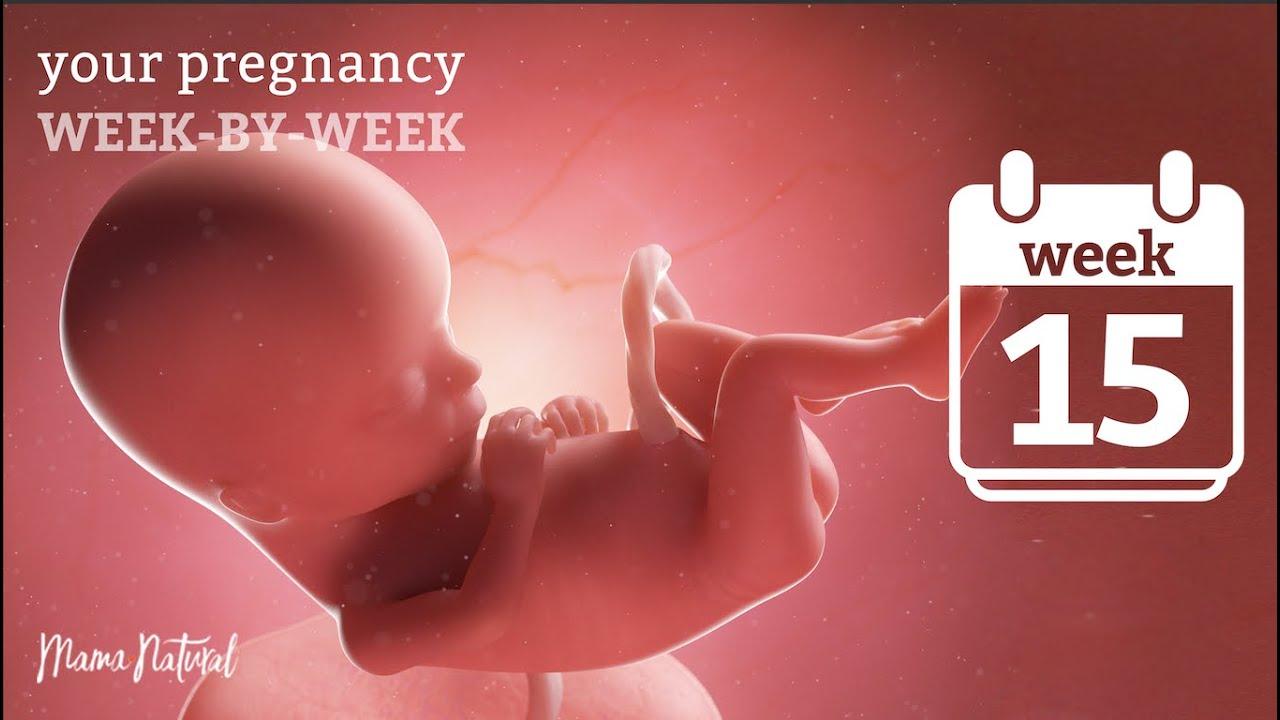 Download 15 Weeks Pregnant - Natural Pregnancy Week-By-Week