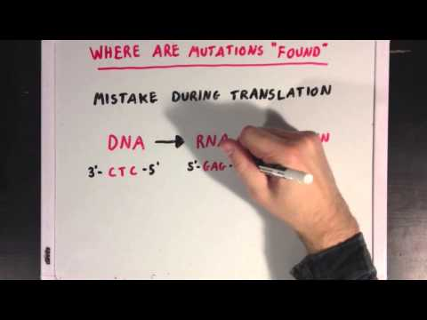 An Introduction to Genetic Mutations