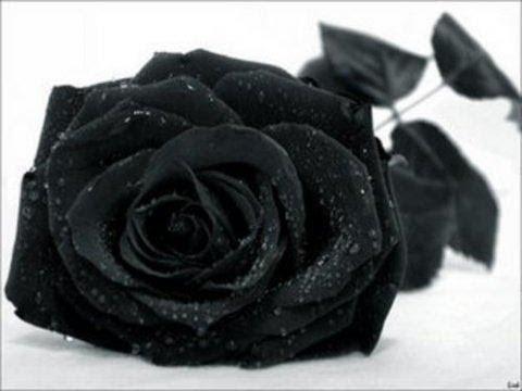 Grades Frases De Filósofos Rosa Negra Youtube