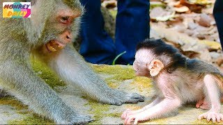 Queen act so scare her baby to stop baby crying | Valentin stop cry & wonder mom | Monkey Daily 2628