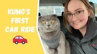 Scottish Fold Cat's 1st Car Ride Adventure!