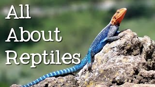 All About Reptiles: What Makes it a Reptile? - FreeSchool