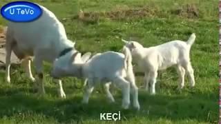 Çocuklar İçin Hayvan Sesleri ve Görüntüleri