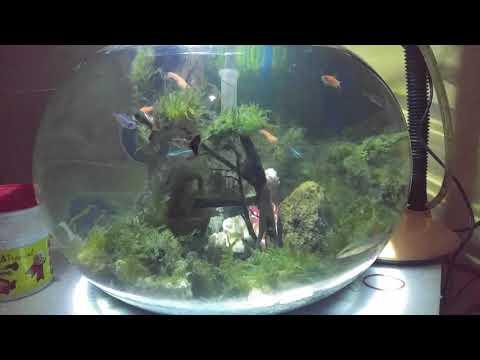 Aquascape Tank Bulat Aquarium Bulat Akuarium Bulat