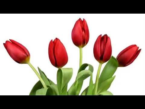 Dạy bé thông minh sớm - Bộ thẻ flash card các loại hoa- day be thong minh som