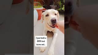 Happy doggo ❤ #shorts