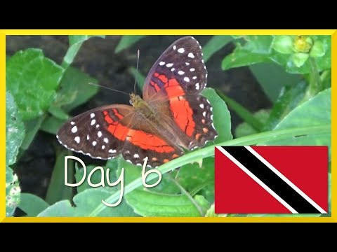 Trinidad: Lazy Cook - Taste of Trini Tour 2017 - Day 6