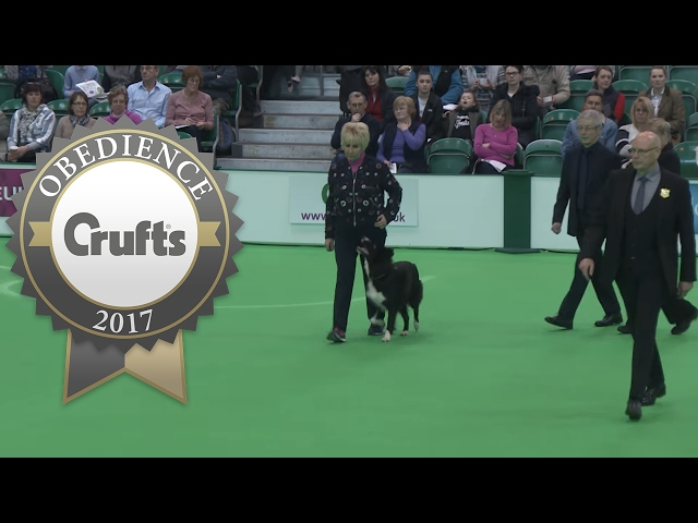 Obedience Championship - Bitches - Part 10 | Crufts 2017