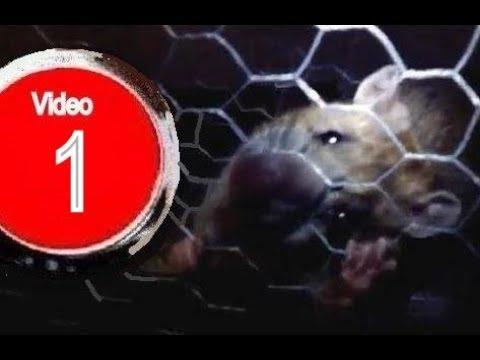 Wisebox trampa inteligente de captura multiple para - Mejor veneno para ratones ...