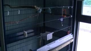 バーミンガム市王立動物虐待防止協会(RSPCA)3