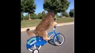 Komik Köpek Videoları---Funny Dog Videos
