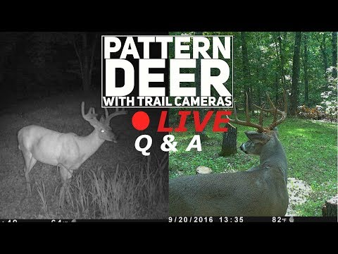 LIVE Q & A - Pattern Deer with Trail Cameras