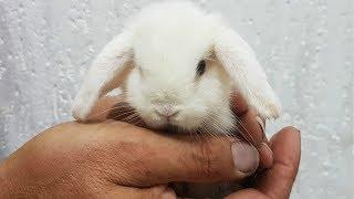 Крольчата открывают глазки