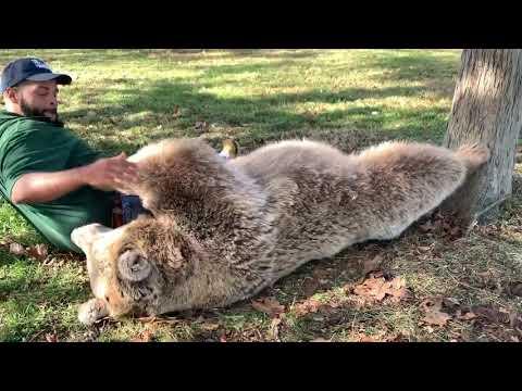 JT - Now This is a Bear Hug