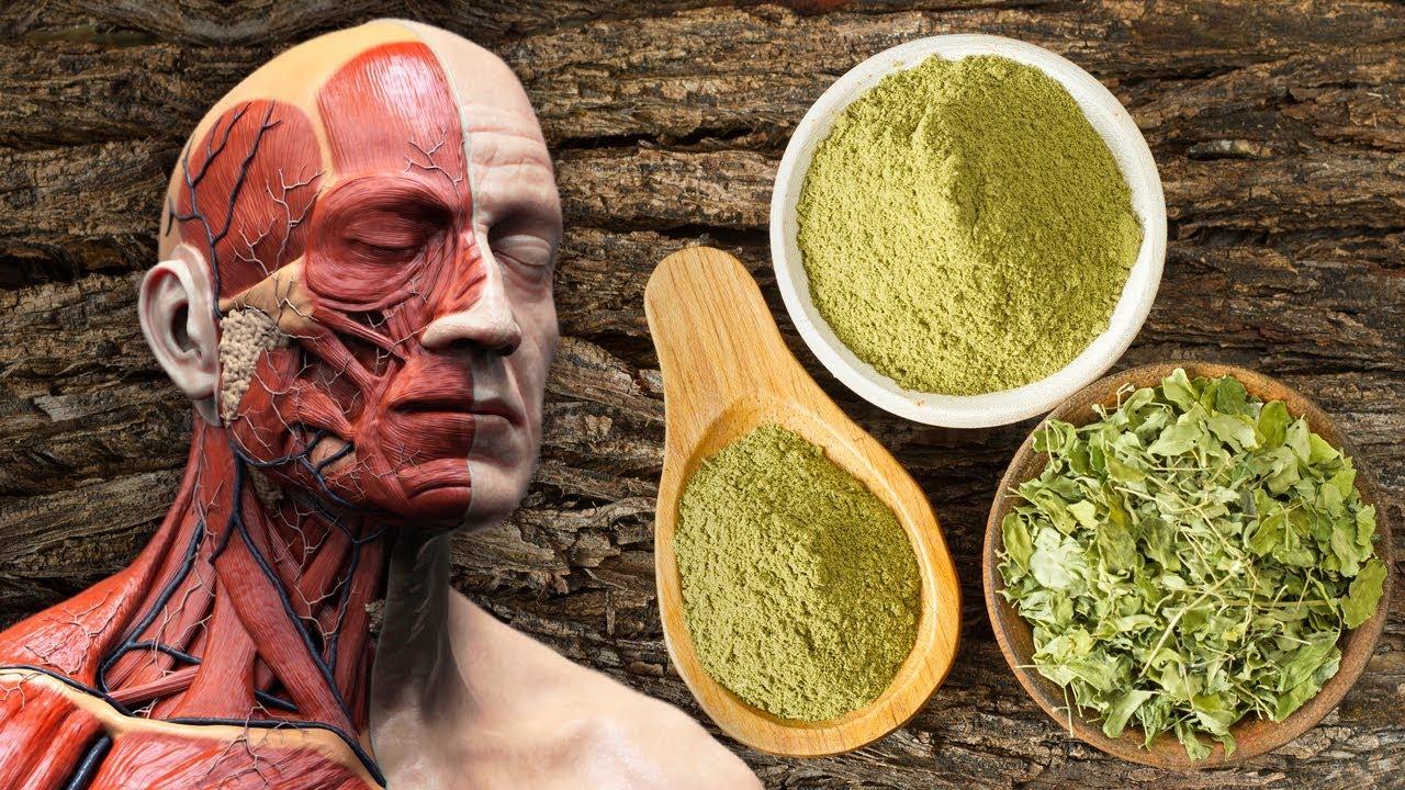 Moringa: 10 Reasons Why You Need This Superfood