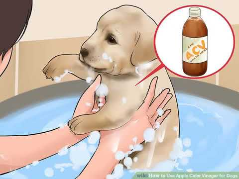 creatives-common-|-how-to-use-apple-cider-vinegar-for-dogs?-🄲🄲
