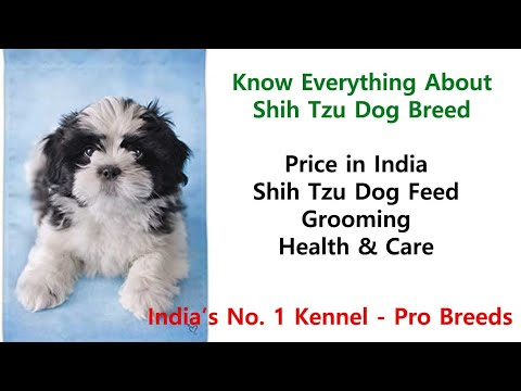 all-about-shih-tzu-dog-breed-in-india:-how-much-they-cost,-health,-feeding,-training-and-grooming