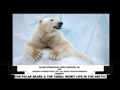 THE POLAR BEARS & THE YAMAL NENET LIFE IN THE ARCTIC, BY MARLON PALMER