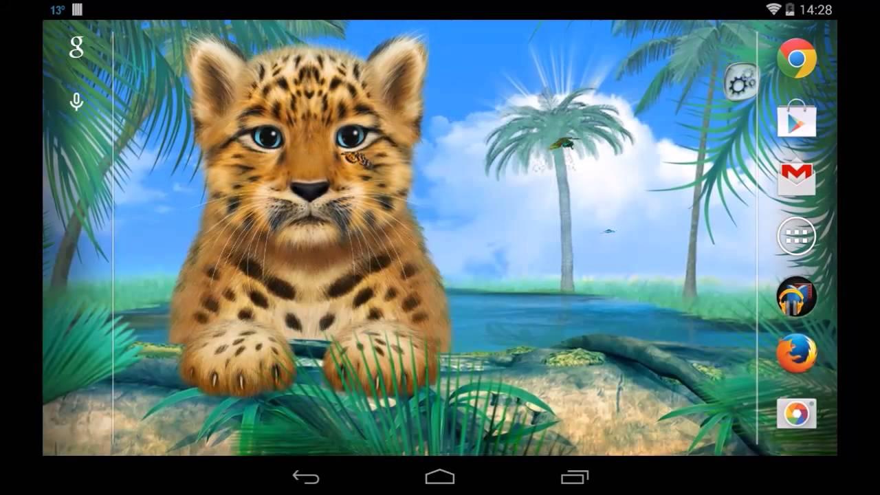 Wild Animals: Leopard. Live Wallpaper - YouTube