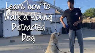 Learn how to do loose leash walking with your 8 month old dog