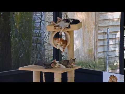 Tree of cute -  Kittens Playing