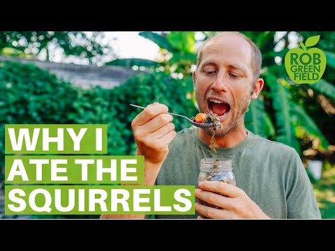 why-i-ate-the-squirrels-eating-food-from-my-garden