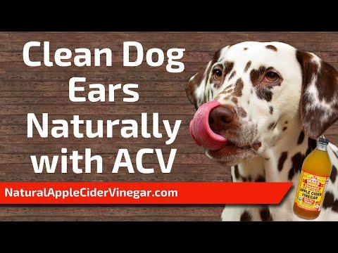 apple-cider-vinegar-for-dog-ears-home-remedy