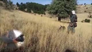 Bıldırcın Avı Osman Gündüz Denizli /Türkiye Quail hunting Перепела Oхота Wachteljagd