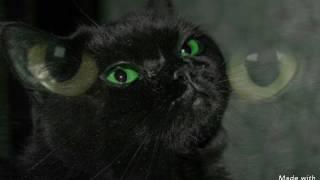 Заствит ли видео вас плакать у кого пропал кот