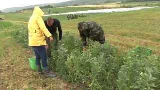 Biologische Landwirtschaft Mogg.