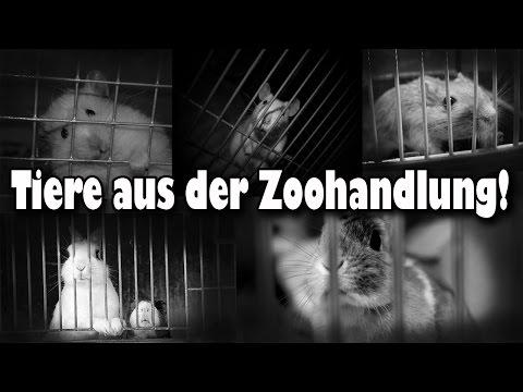 Tiere aus der Zoohandlung! Warum man keine Tiere aus der Zoohandlung kaufen sollte! Aufklärung