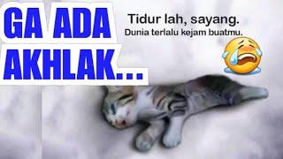 VIRAL VIDEO KUCING: 1400 TAHUN LALU NABI SAMPAIKAN | Perilaku Terhadap Kucing Hewan Kesayangan Nabi