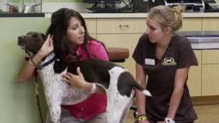Harmony Canines, Dog Training Services
