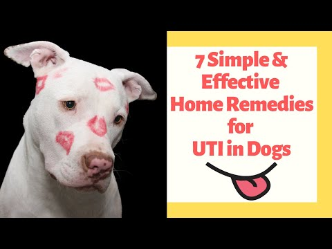 15 Home Remedies for UTI in Dogs You Will Love - eHome Remedies